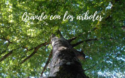 Orar con los árboles  – 18 de octubre