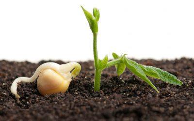 domingo 11B, La semilla – Iñaki Otano